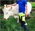 klippemaskin storfe hest sau, 2019, Farm machinery